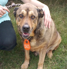 Harvey is a mellow, loving guy that would love to share some time with you.